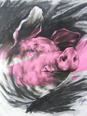 Pink Pig (charcoal and acrylic 52 x 52cm framed) £380 plus delivery by Maria Morgan