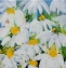 Floaty Daisies Mixed (44 x 44cm Media on Canvas) £250