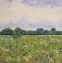 Summer Glory II; Eades Meadow (oil on canvas unframed 40 x 40cm) Sold by Paul Langford